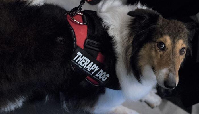 Θεραπεία μέσω σκύλων